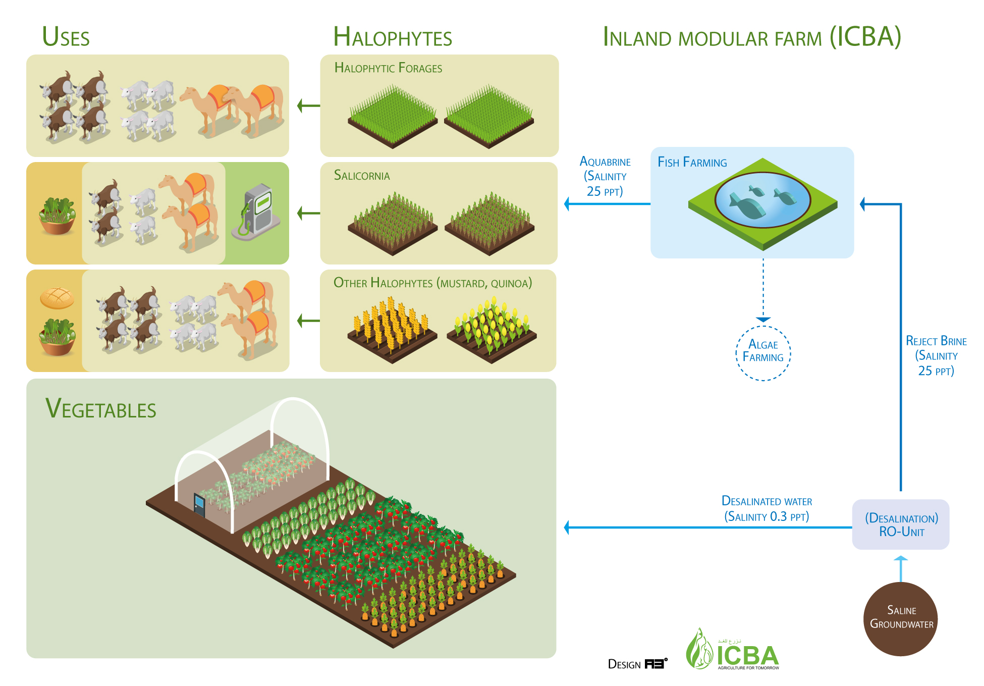 Figure 1. Integrated farm developed at ICBA's experimental station (inland modular farm) ©ICBA