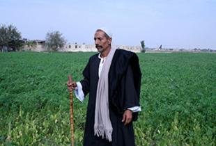 تحويل سيناء إلى أرض خضراء  - قصة جمال الخولي