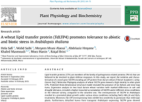 A wheat lipid transfer protein (TdLTP4) promotes tolerance to abiotic and biotic stress in Arabidopsis thaliana