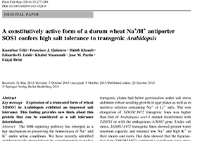 A constitutively active form of durum wheat Na+/H+ antiporter SOS1 confers high salt tolerance to transgenic Arabidopsis