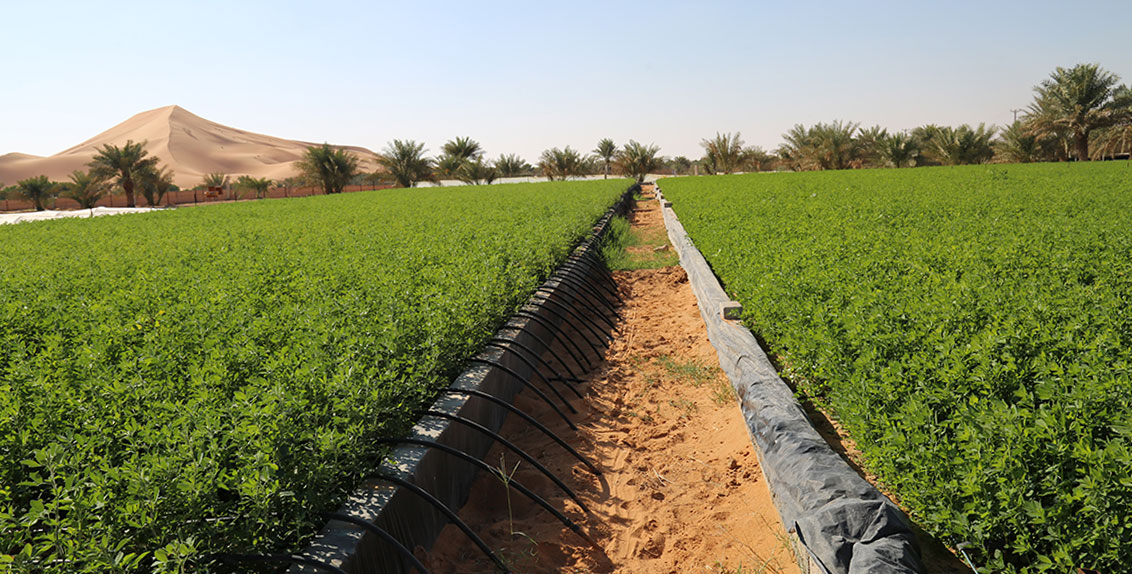 The UAE implements a range of measures, policies and strategies to ensure uninterrupted food supplies from abroad and scale up agricultural production at home.
