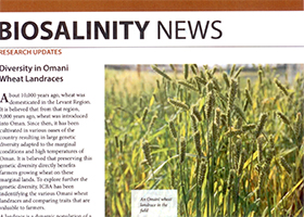 Diversity in Omani wheat landraces