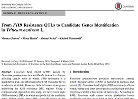 From FHB Resistance QTLs to Candidate Genes Identification in Triticum aestivum L.
