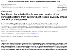 Functional characterization in Xenopus oocytes of Na+ transport systems from durum wheat reveals diversity among two HKT1;4 transporters