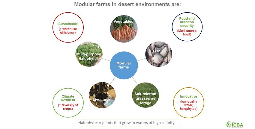 Modular farming approaches focus on exploiting reject brine for fish farming and production of halophytes (salt-loving plants) on inland farms, and seawater and aquaculture effluents for cultivation of halophytes in coastal desert areas, bringing into production degraded or barren lands with economic benefits for local communities.