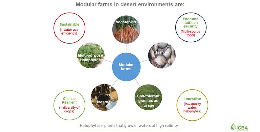 يركز منهج المزارع النموذجية على استغلال المياه شديدة الملوحة للاستزراع السمكي وإنتاج النباتات الملحية (النباتات المحبة للملح) في المزارع الداخلية وكذلك مياه البحر ومخلفات الزراعة المائية في زراعة النباتات الملحية في المناطق الصحراوية الساحلية بهدف إعادة الأراضي المتدهورة إلى الإنتاج بعوائد اقتصادية للمجتمعات المحلية.