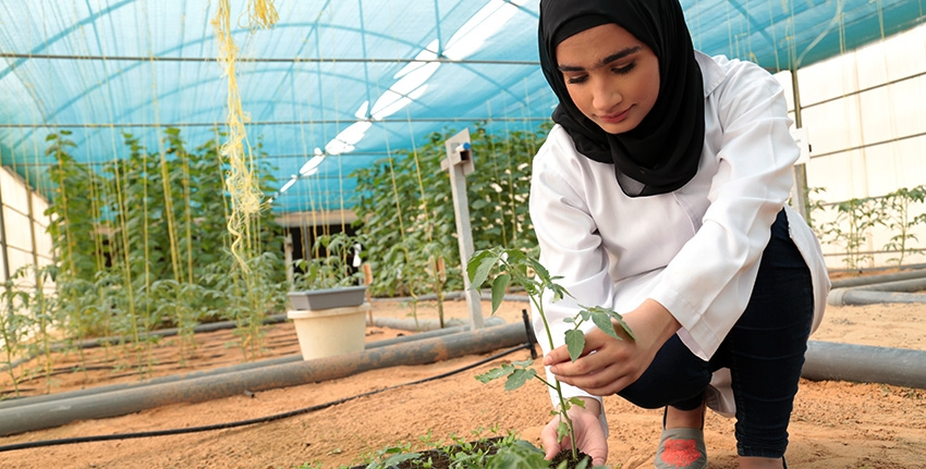 Hamda Al-Masoum is one of many interns who have benefitted from ICBA's internship program. A bachelor's student at Zayed University, UAE, she conducted a comparative analysis of crop production under greenhouse and net-house conditions as part of her internship at ICBA.