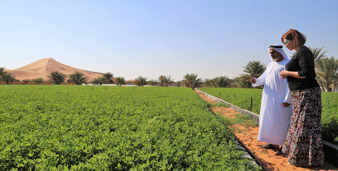 ومن جملة ما ورد في الاتفاق، يعمل إكبا ومركز خدمات المزارعين بأبوظبي على تعزيز التعاون لتطوير المشاريع التي تهدف إلى تحسين إنتاجية أشجار نخيل التمر والخضروات والمحاصيل العلفية التي يتم زراعتها في تربة عالية الملوحة، ودراسة الاحتياجات المائية لنخيل التمر والأعلاف وغيرها من المحاصيل.