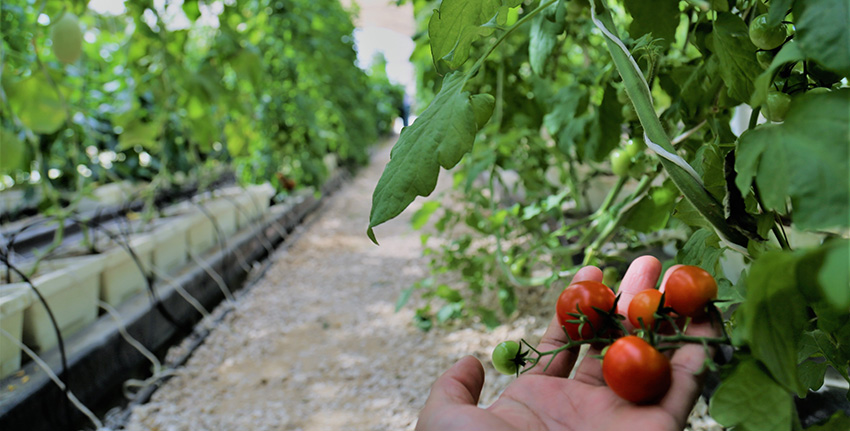 Low-cost technology to make horticulture more profitable in UAE