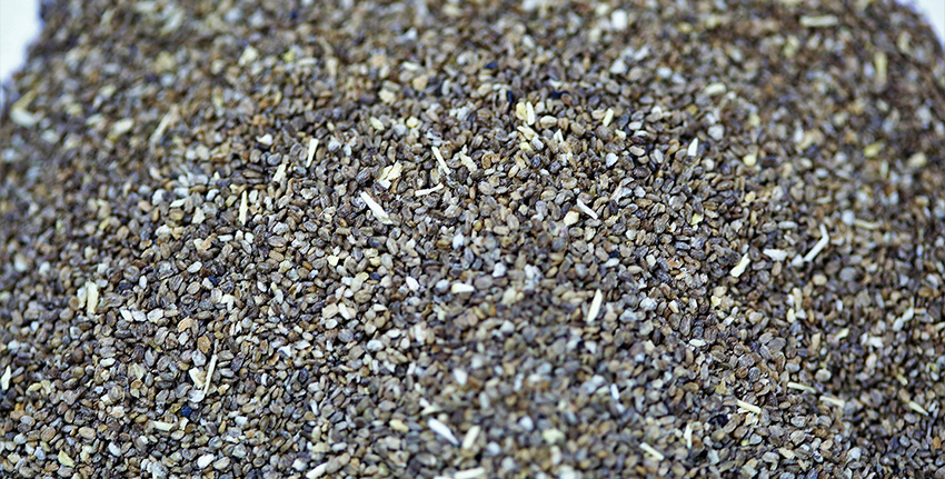 والساليكورنيا نبات محب للملح يمكن استخدامه كغذاء وعلف فضلاً عن استخدامه في إنتاج الوقود الحيوي.