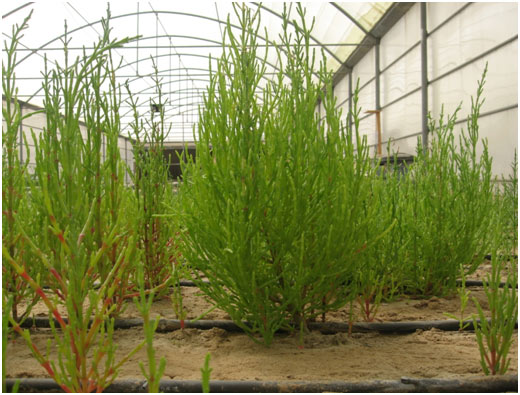 Research in the UAE on Sustainable Bio-Energy Shows Promising Results