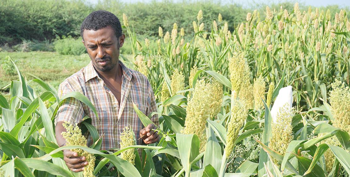 لقد جاءت هذه الدراسة ضمن فعاليات مشروع إعادة تأهيل وإدارة التربة المتأثرة بالملوحة لتحسين الإنتاجية الزراعية (RAMSAP)، حيث يهدف هذا المشروع الخمسي (2015-2019) الممول من قبل الصندوق الدولي للتنمية الزراعية (IFAD) إلى زيادة الإنتاجية الزراعية وتحسين مستوى الأمن الغذائي، فضلاً عن زيادة الدخل لدى المزارعين أصحاب الحيازات الصغيرة والمجتمعات الرعوية والزراعية الرعوية في كل من إثيوبيا وجنوب السودان.