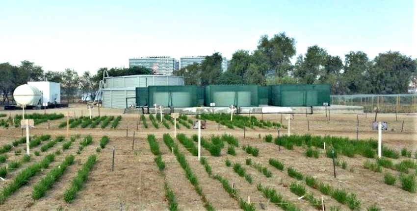 Since 2013, ICBA has operated a modular farm irrigated from a reverse osmosis unit to develop a cost-effective production scheme that transforms reject brine into a source of profit for farmers.