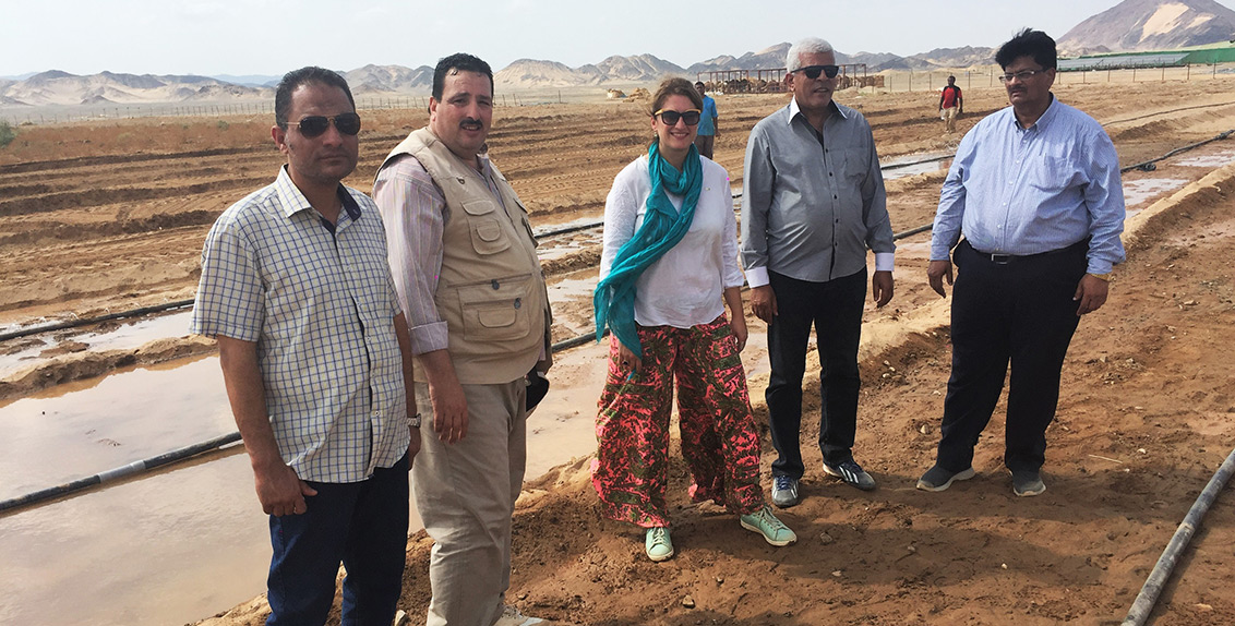 ICBA will work with the Egyptian Center of Excellence for Saline Agriculture and the Desert Research Center, Egypt, on quinoa production in the New Valley Governorate, and with the Ministry of Agriculture and Land Reclamation and the Red Sea Governorate on Salicornia production trials in the areas of Shalateen and Wadi El Quweh.