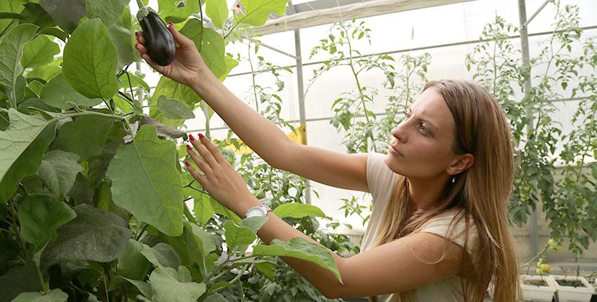 خلال فترة تدريبها الداخلي في إكبا، أجرت ياسمين كوزتيتش، طالبة الماجيستير في جامعة بلغراد في صربيا، مشروعاً حول كفاءة استخدام المياه والطاقة في زراعة الخضروات.