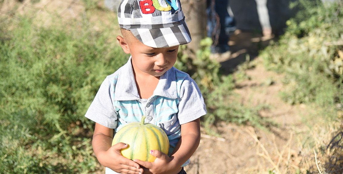 "Placing his grandson on his shoulder, Adylbek leads us to the field. In the beginning of August, he planted pearl millet and sorghum to use for green mass in winter. His grandson, three-year-old Magjan named after a famous Kazakh poet, insists on him going to other fields too so that we take photos of him with watermelon. Adylbek follows the toddler's request. ""His parents have just departed for Kazakhstan, that's why the child is distressed,"" he justifies."