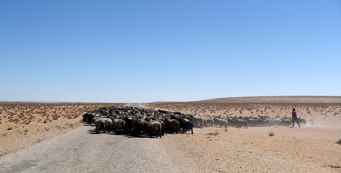 ورغم الشح الكبير في المياه السطحية على امتداد صحراء كيزيلكوم، إلا أنها تتسم بغناها باحتياطي من المياه الجوفية المالحة المضغوطة. وقد كانت الصحراء لسنوات طويلة مرعى للحيوانات، لاسيما لأغنام كاراكول والإبل.