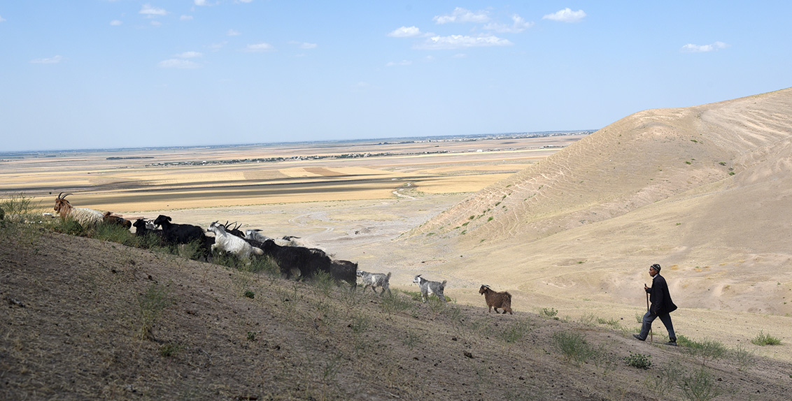Mr. Rustam Abdusattorov, a livestock farmer in Jizzakh Region, Uzbekistan, struggles to provide enough fodder for his flock and has to purchase feed in the market.