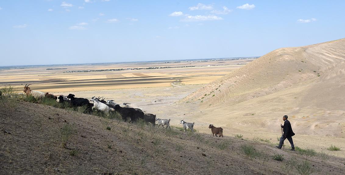 السيد رستم عبد الستاروف، مربي حيوانات في منطقة جيزاك، بأوزبكستان، يسعى جاهداً لتوفير أعلاف كافية لقطعانه، حيث اشترى كميات كبيرة منها من السوق.