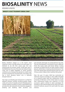 Barley: A salt tolerant cereal crop