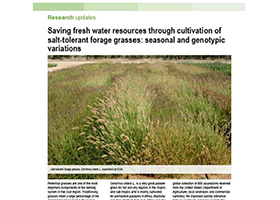 Saving fresh water resources through cultivation of salt-tolerant forage grasses: seasonal and genotypic variations