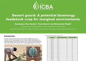 Desert gourd: A potential bioenergy feedstock crop for marginal environments