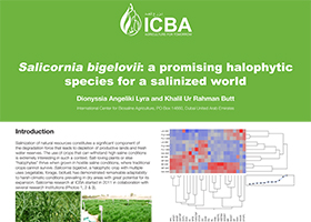 Salicornia bigelovii: a promising halophytic species for a salinized world