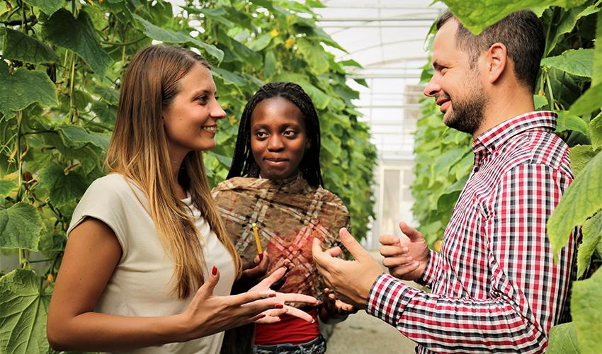 انخراط الشباب في الإنتاج الزراعي: تنمية التقانات التي تهم الشباب وتحويل الزراعة إلى خيار عمل مرغوب