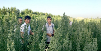 Farmers in southern Khatlon Region, Tajikistan, are also keen to cultivate the Andean wonder crop. Four local farmers have started quinoa seed multiplication.