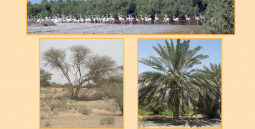 Salt-tolerant Plants of the United Arab Emirates International Center for Biosaline Agriculture and Abu Dhabi Food Control Authority