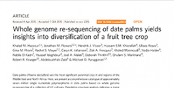 Whole genome re-sequencing of date palms yields insights into diversification of a fruit tree crop