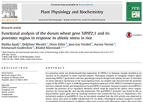 Functional analysis of the durum wheat gene TdPIP2;1 and its promoter region in response to abiotic stress in rice