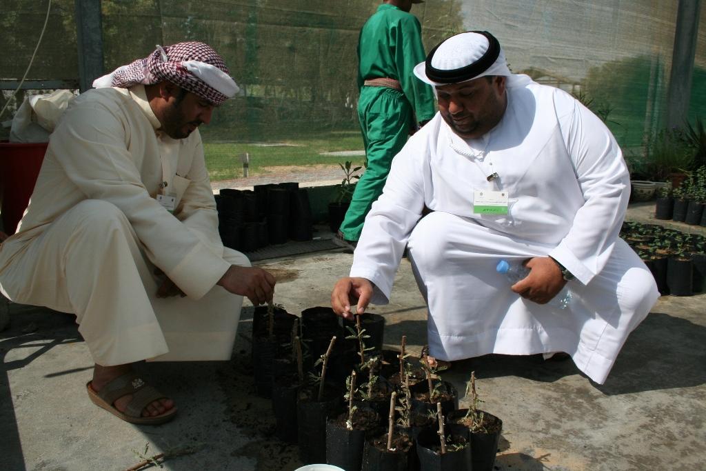الموارد الوراثية النباتية في الإمارات العربية المتحدة