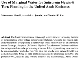 Use of marginal water for Salicornia bigelovii Torr. Planting in the United Arab Emirates